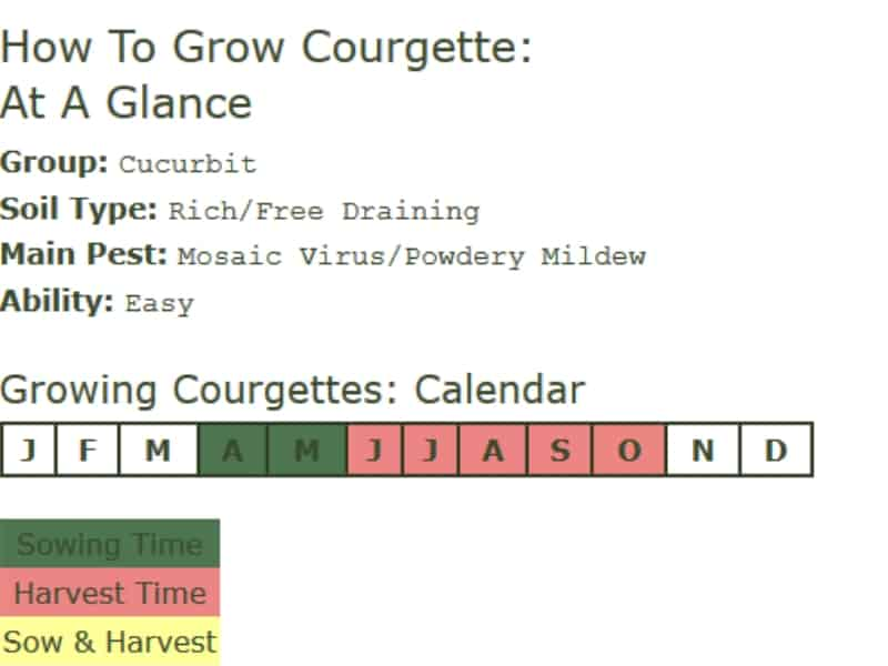 How to grow courgette, also known as zucchini