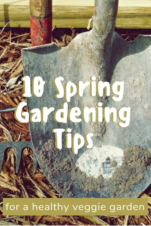Every gardener I know is anxious to start working in the garden. Here's a quick list of spring gardening tips so you're ready to plant your veggie garden #gardening #spring #springgardening #gardeningtips #vegetablegardening #organicgarden #growyourown