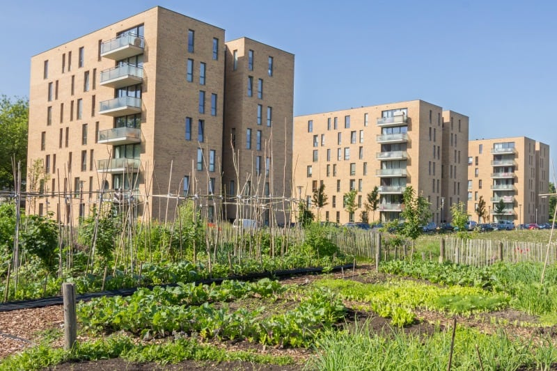 Urban greening - a thriving city garden