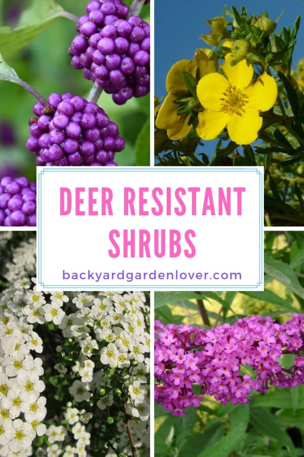 Collage of deer resistant shrubs