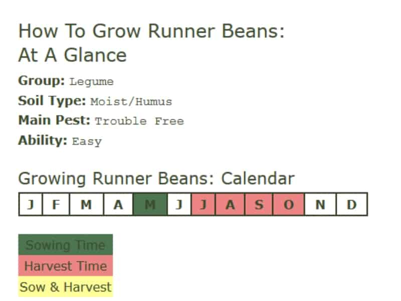 How to grow runner beans - at a glance