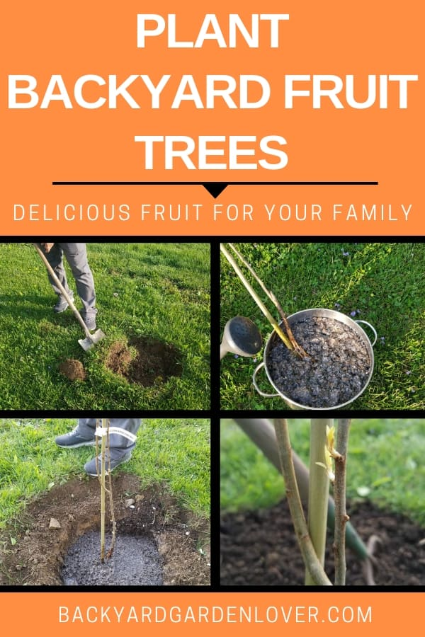Plant backyard fruit trees and enjoy delicious fresh fruit year after year.