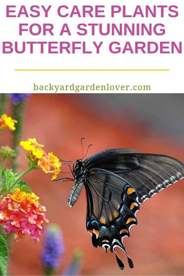 A black butterfly on a yellow and orange flower