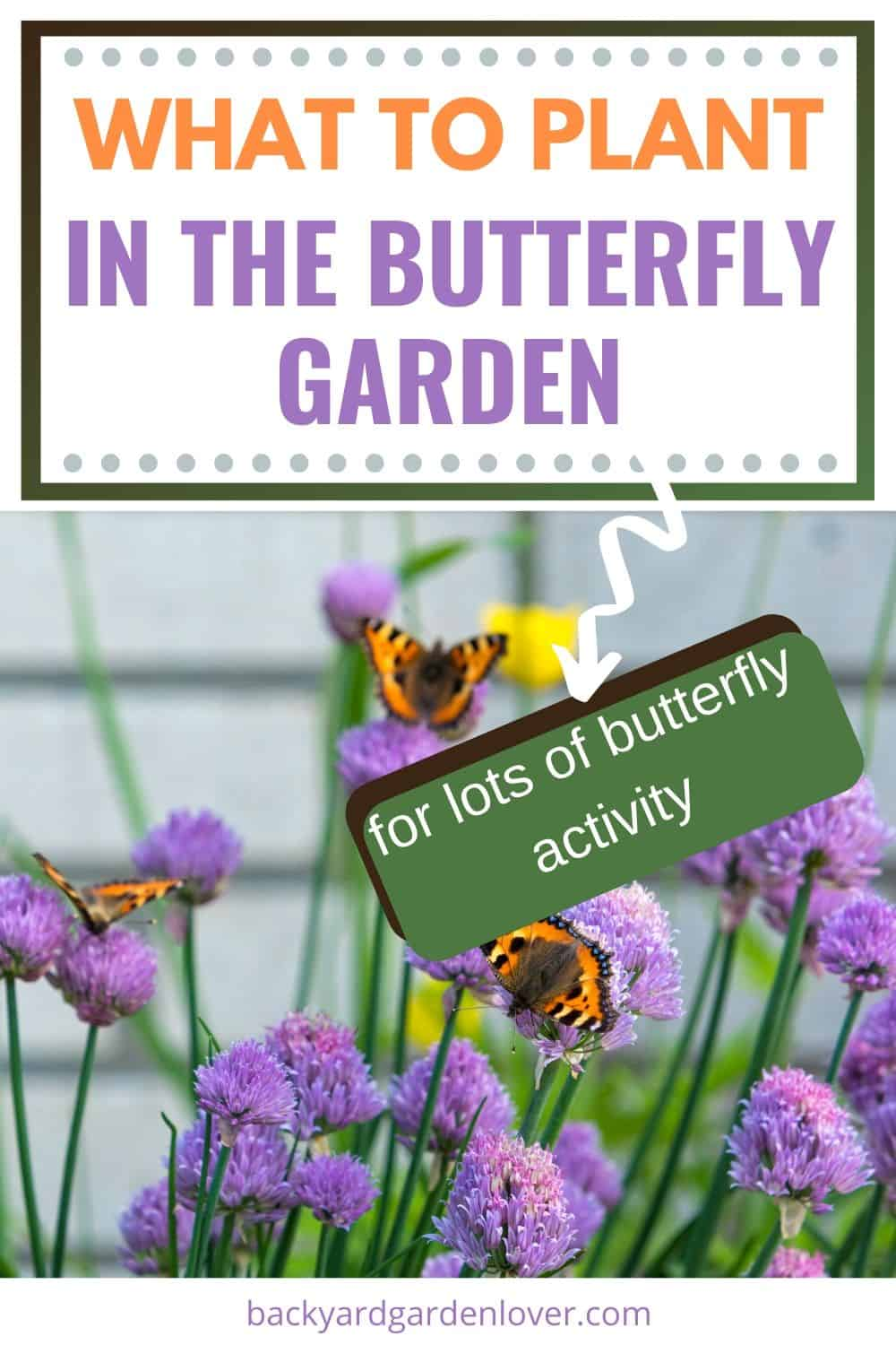 What to plant in the butterfly garden