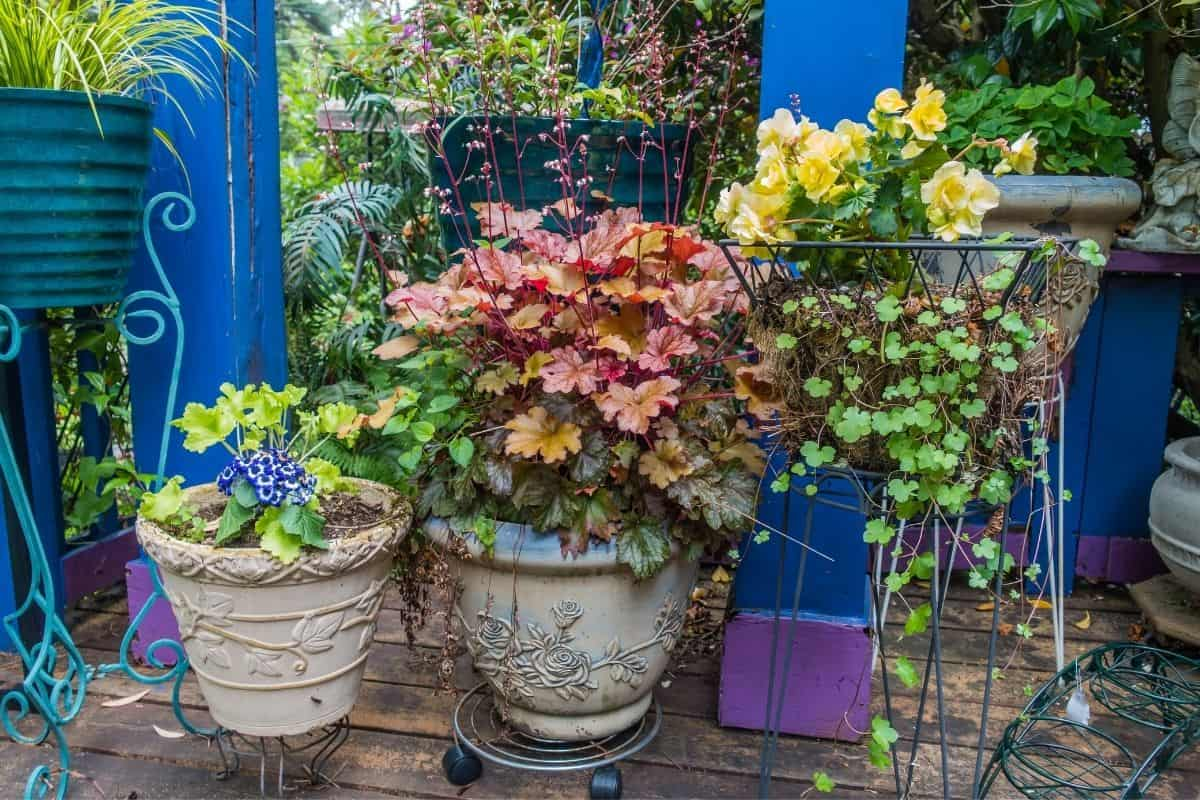 potted plants with colorful foliage
