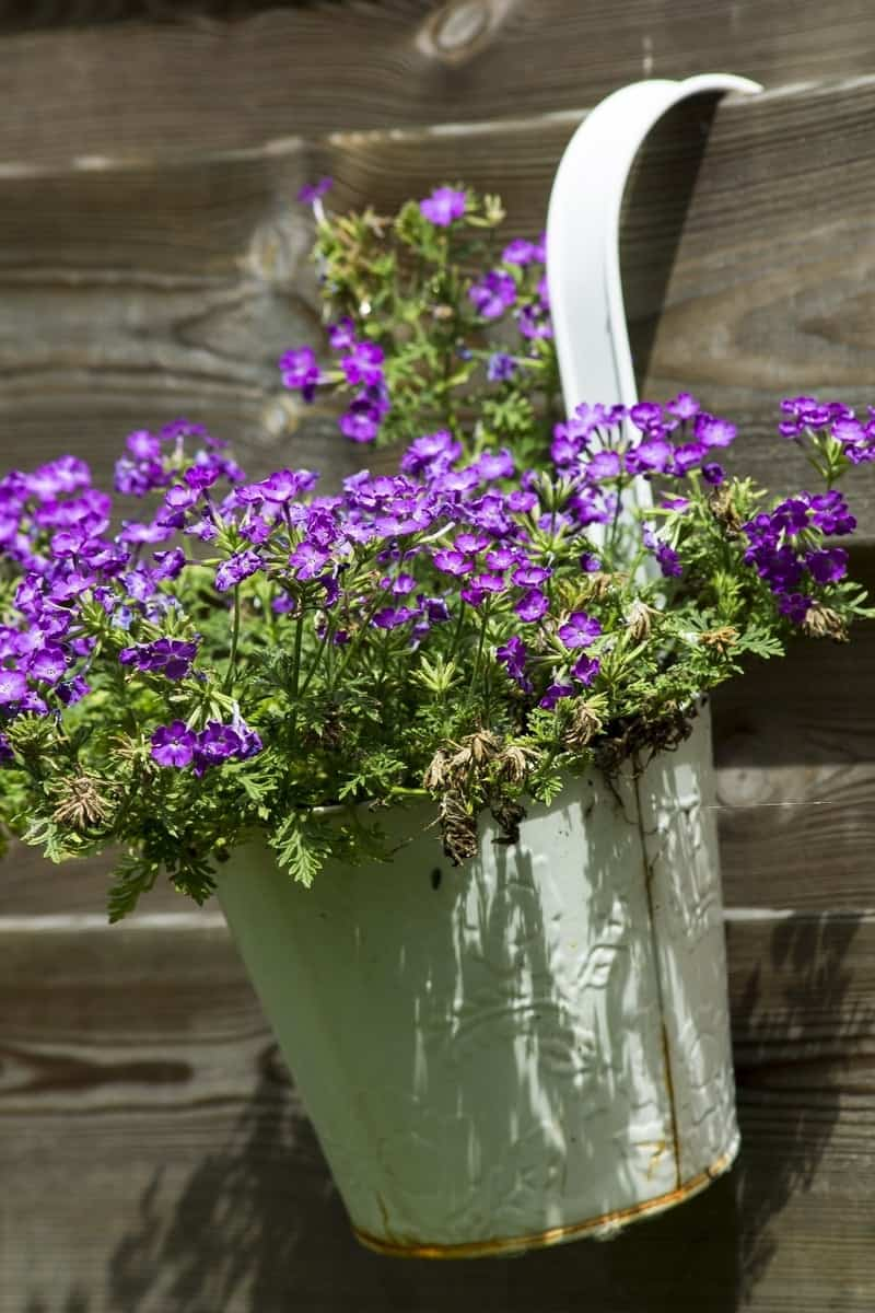 Hanging white pail with purple flowers