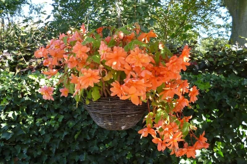 Hanging wicker basket