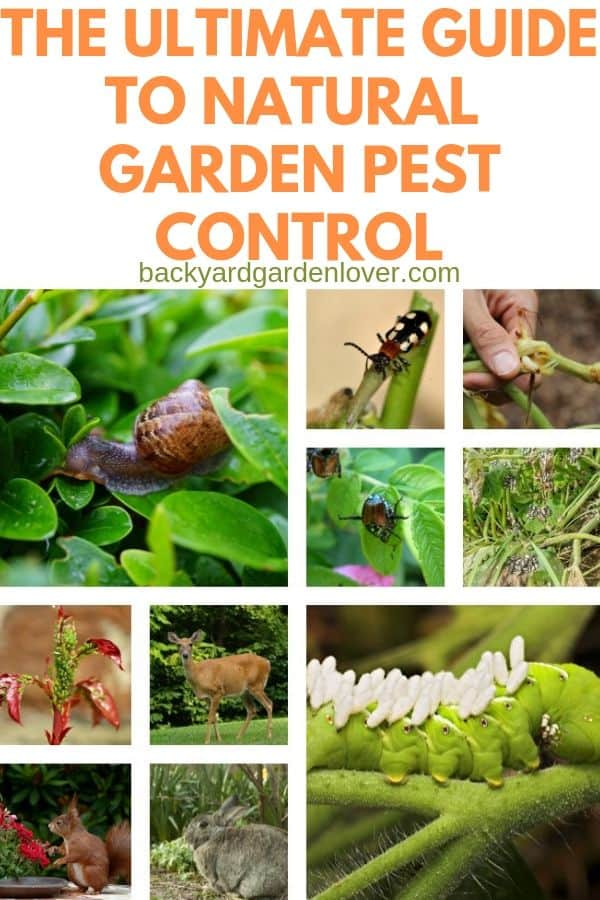 Collage of garden pest images: snail, beetles, aphids, deer, and hornworm
