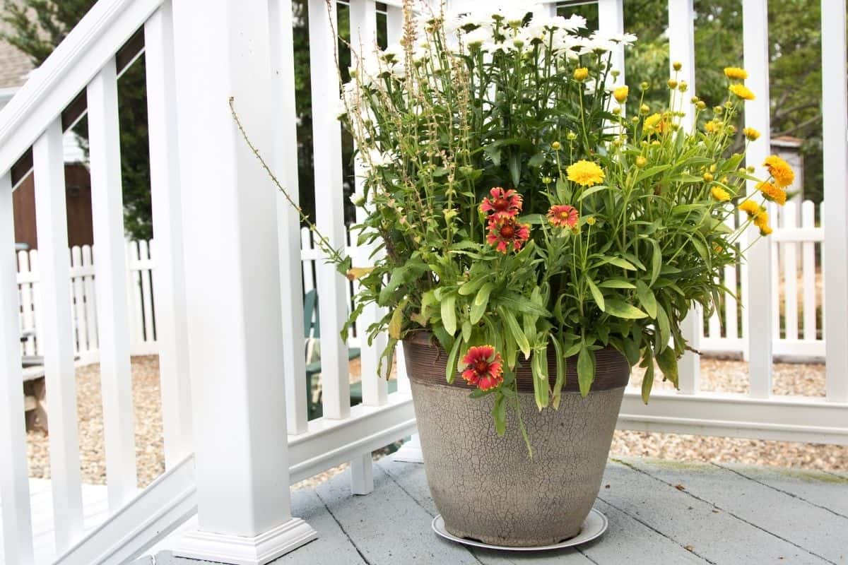 a porch planter filled with colorful flowers