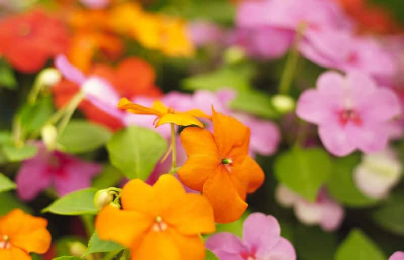 Summer flowers in shades of yellow, pink and orange