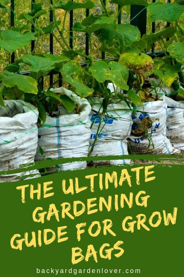 Vegetables growing in grow bags