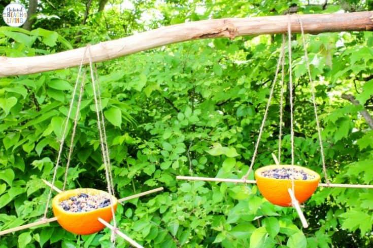 Orange Bird Feeder - Easy Homemade Bird Feeders