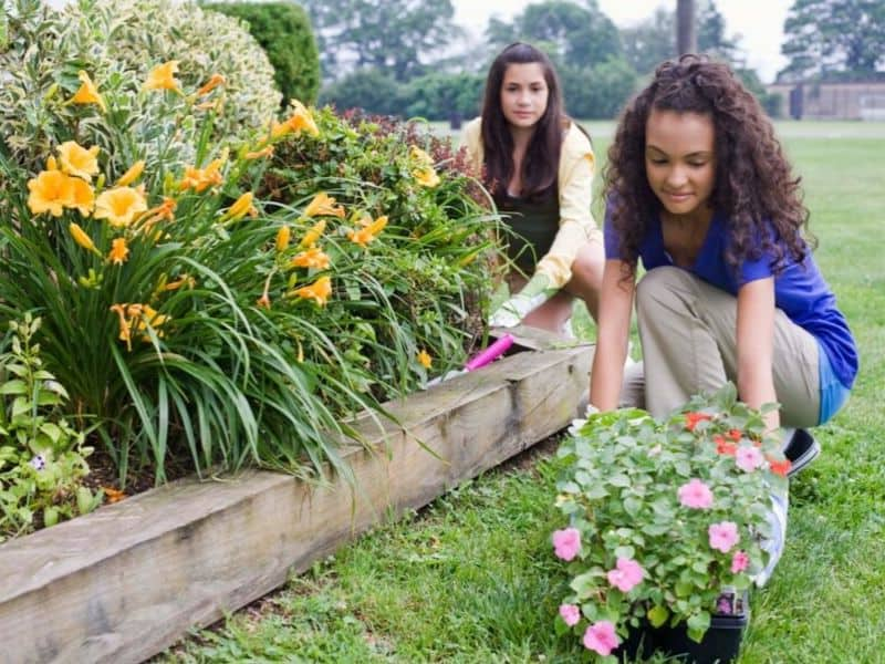 Young girls planting a flower border