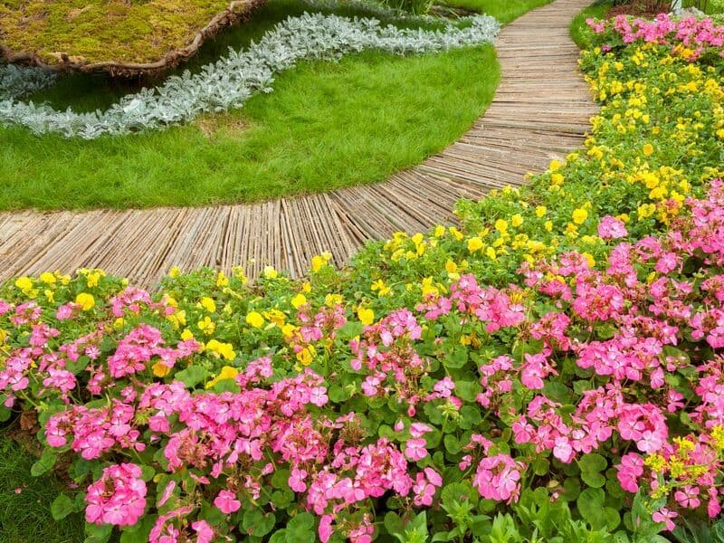 Pink and yellow flowers edging a windy path