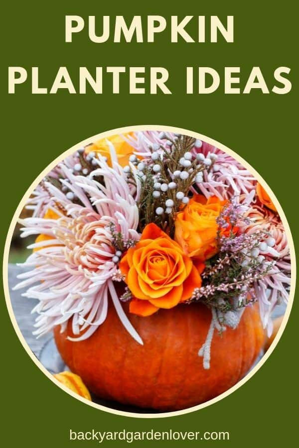 Check out these adorable pumpkin planter ideas! Perfect for fall decorations, for a fall wedding, and even the Thanksgiving dinner table. #pumpkins #pumpkin #falldecor #pumpkinplanter #autumndecor #thanksgiving #holidays #holidaydecorations