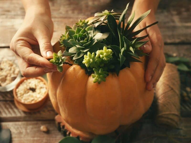 Pumpkin succulent planter