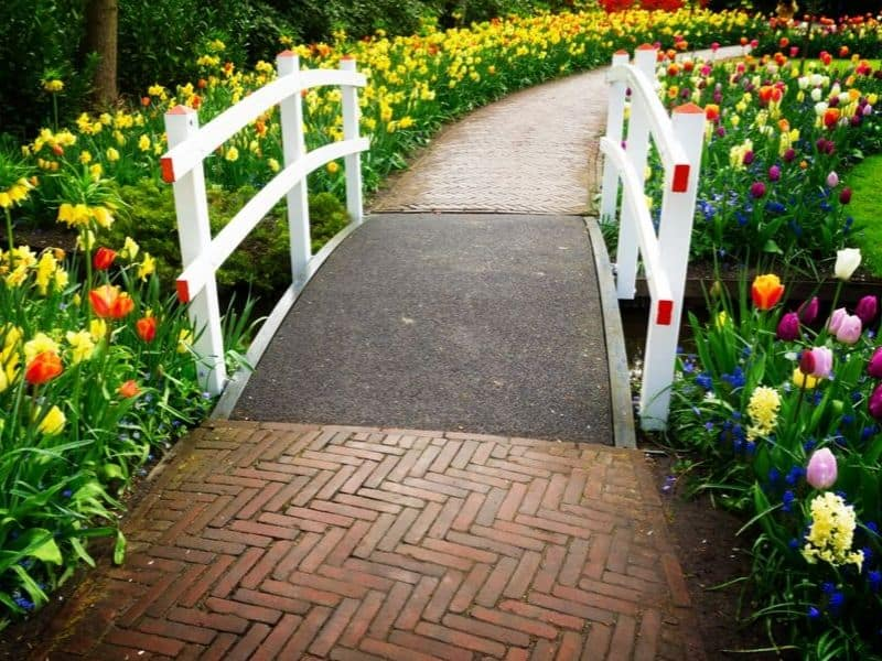 Colorful walkway surrounded by spring flowers