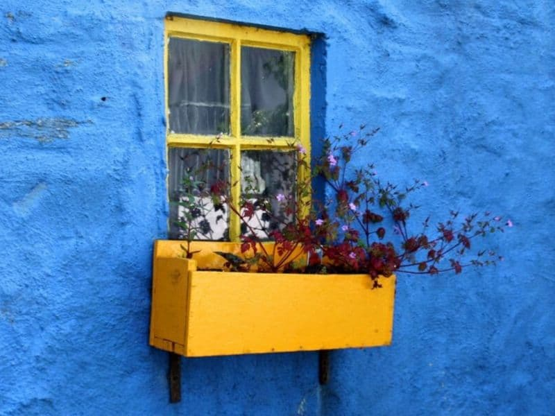 Vibrant colored window box on bright blue wall