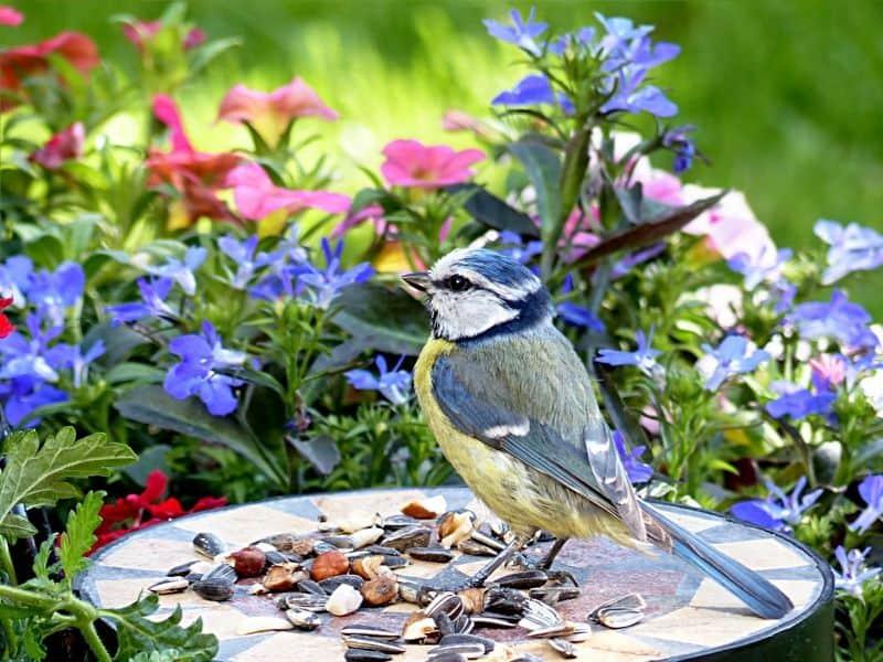Bird in the flower garden