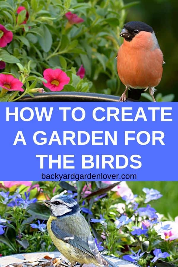 If you'd like to invite birds into your backyard, you'll need to learn how to create a garden for the birds by planting the right trees and shrubs, providing clean water and shelter, and more. #birds #birdwatching #birding #gardenbirds #wildlife #backyard