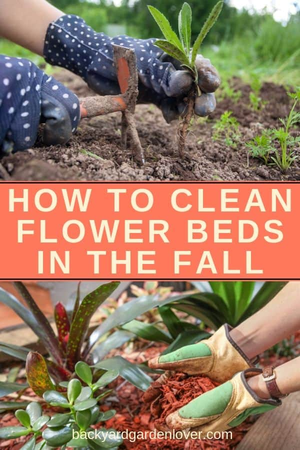 Learn how to clean flower beds in the fall, so that you ca enjoy a gorgeous spring show of fresh flowers. #garden #flowergarden #gardenchores #fallgarden #autumngarden