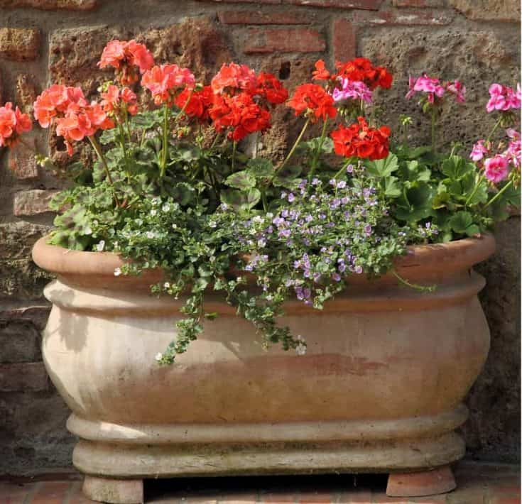 Oval Planters You'll LOVE In Your Garden