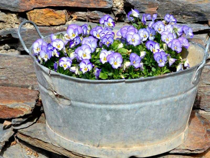 Oval metal planter with purple pansies