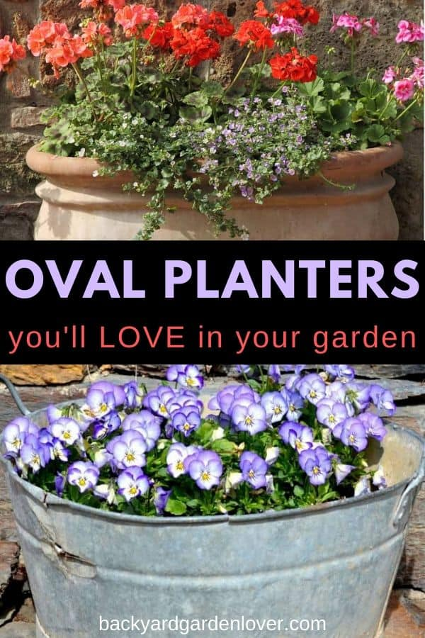 Oval planters are amazing for adding more than one plant to the container. Check out my list of ideas to do with an oval planter: so much fun! #planters #ovalplanters #containergarden #plantlover #gardener #greenthumb #flowers