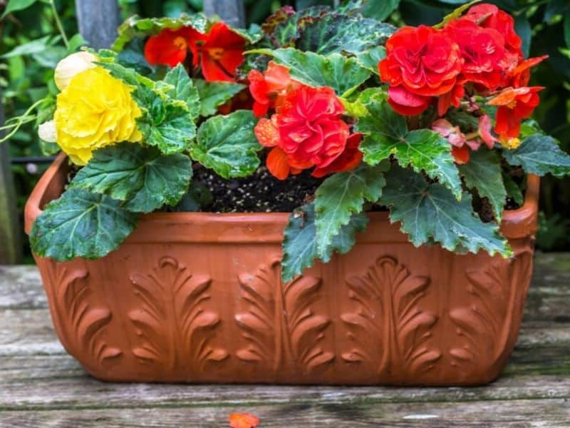A self-watering ceramic planter filled with bright red and yellow flowers