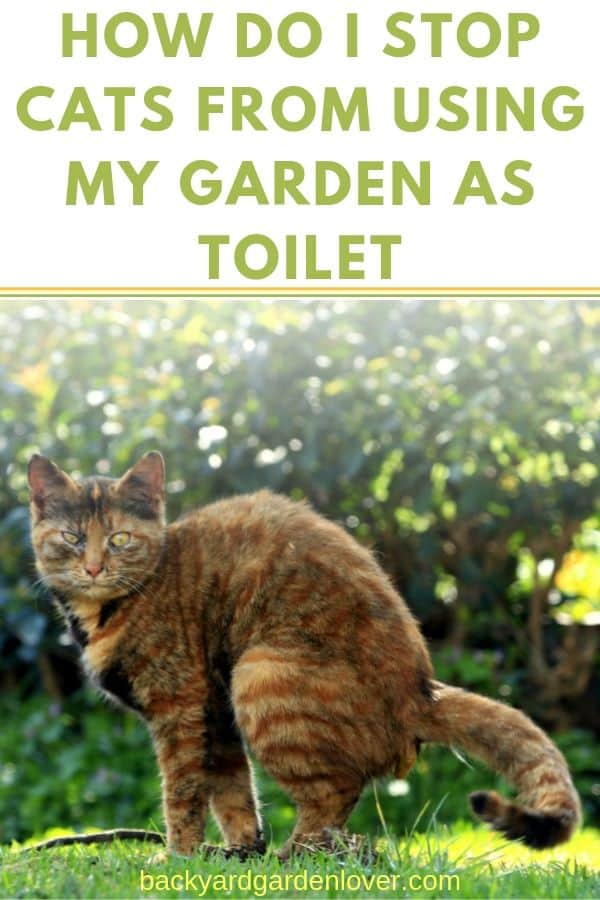 This is a question on the mind of many a gardener: how can I stop cats from using my garden as toilet? I have gathered a nice list of things you can do (and things you shouldn't) to keep cats away form your garden. #catinmygarden #gardening #animals #gardenpests #gardeningtips #cats