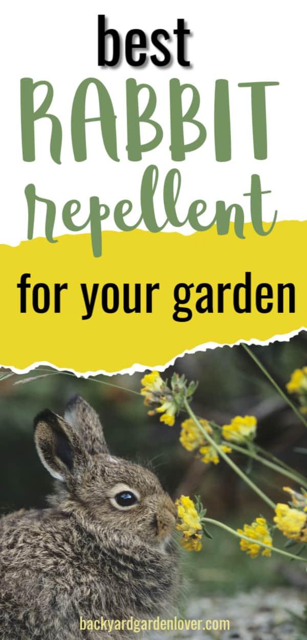 Best rabbit repellent for your garden