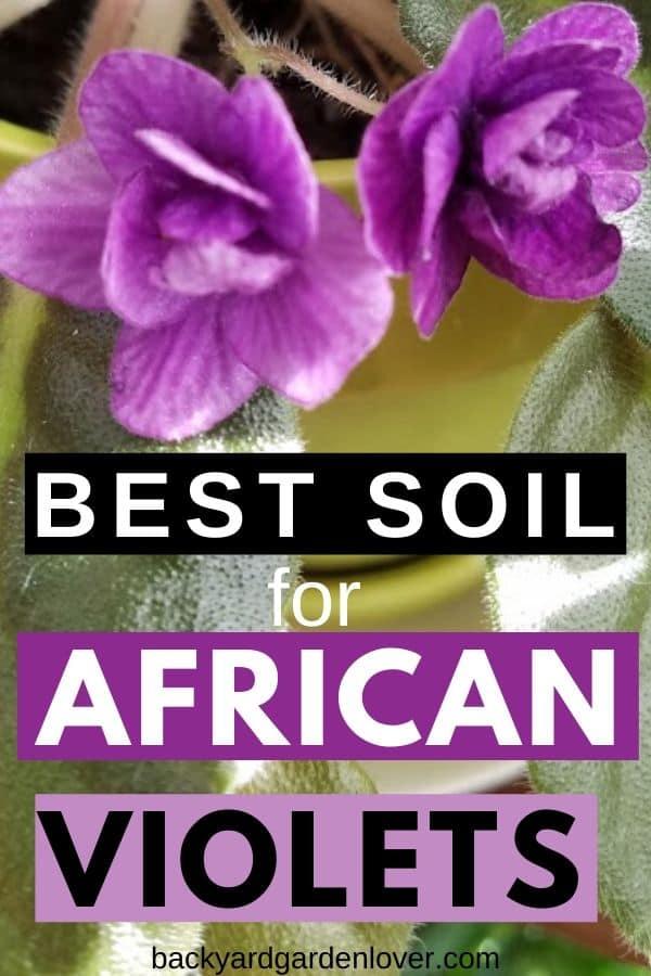 Best soil for African violets