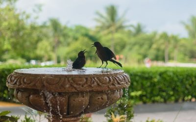 Two cute black birds enjoying a solar bird bath
