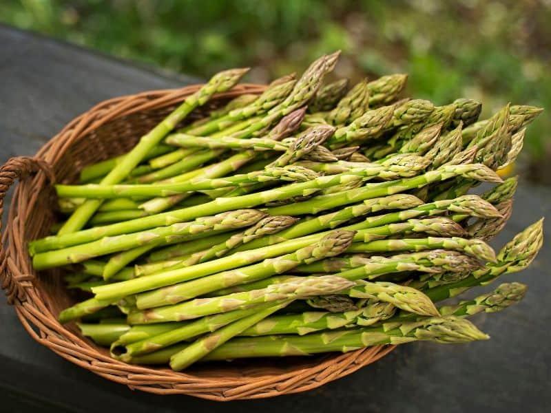 Basket of freshly picked asparagus