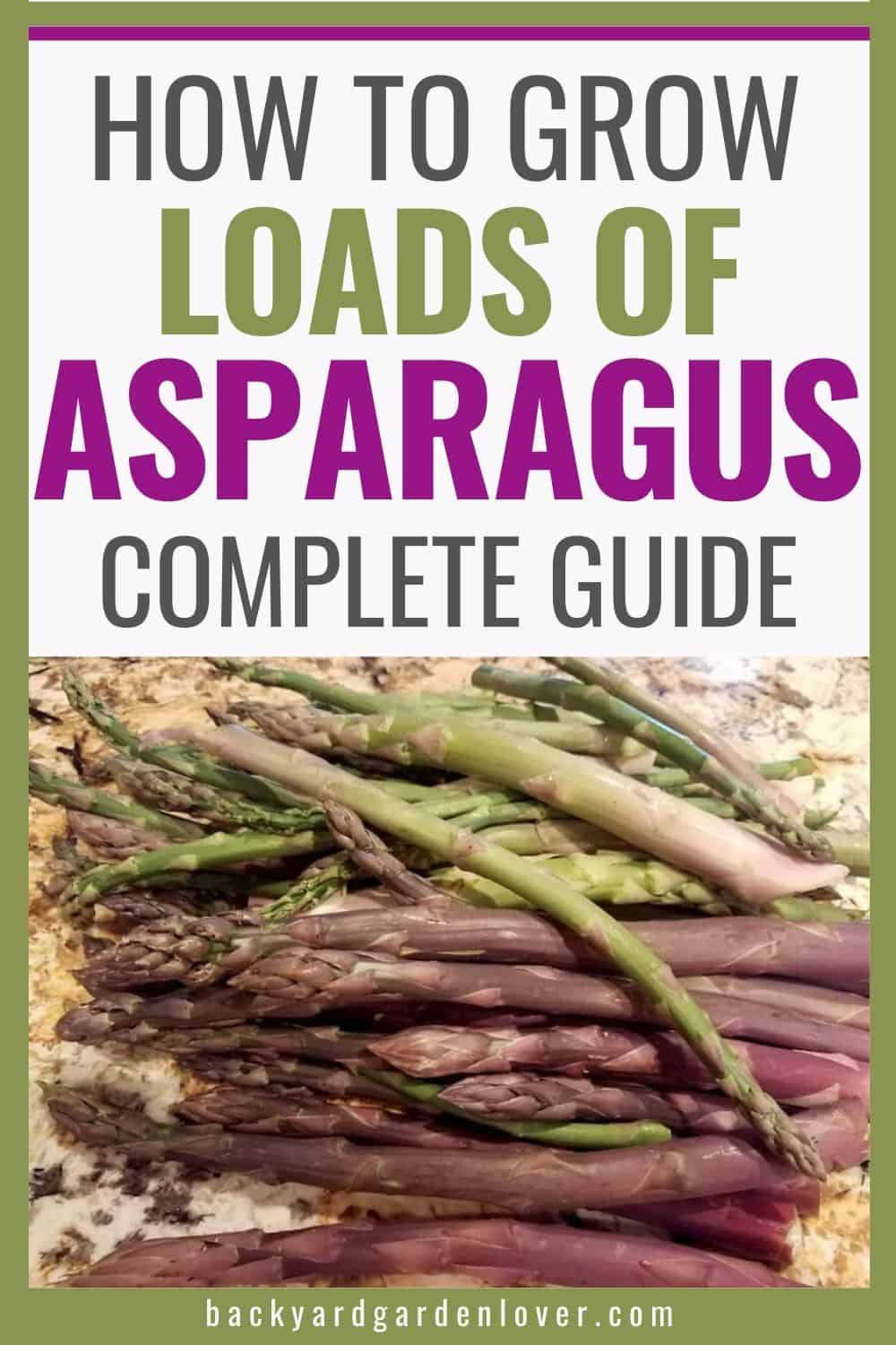 Complete guide to growing asparagus - Pinterest image