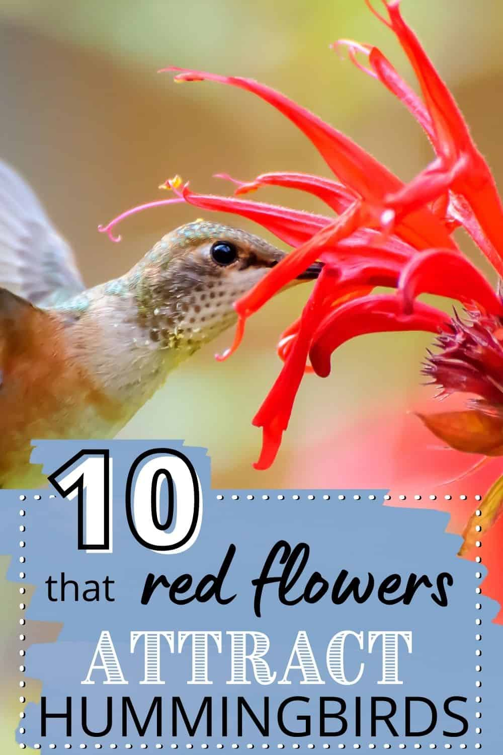 10 red flowers that attract hummingbirds to your garden