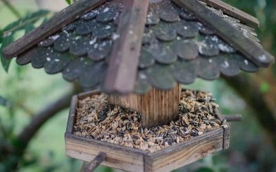 Best Bird Feeder for Winter