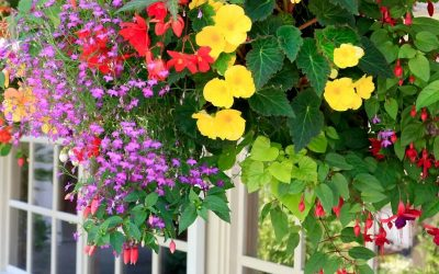 Colorful hanging baskets