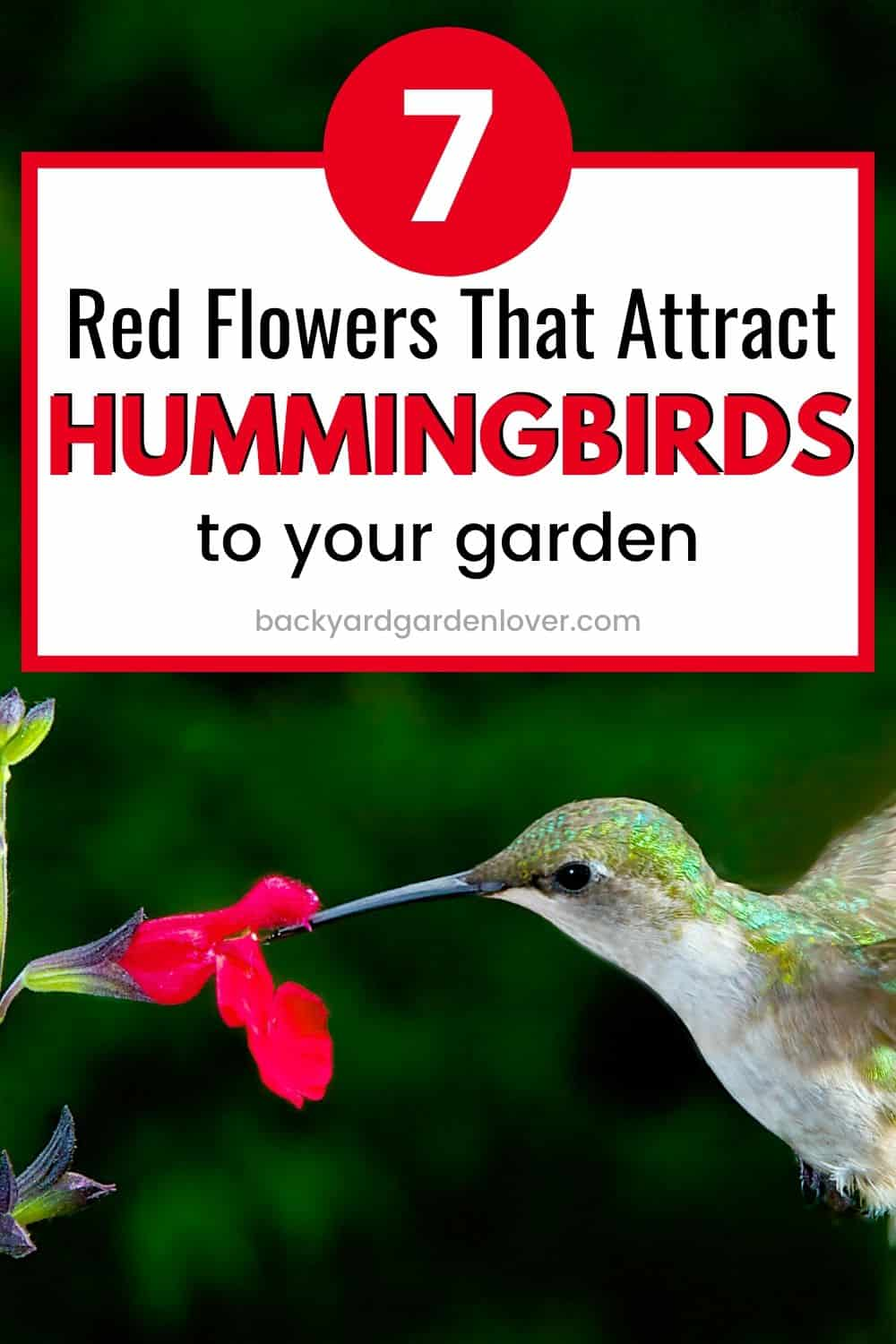 Red flowers that attract hummingbirds to your garden