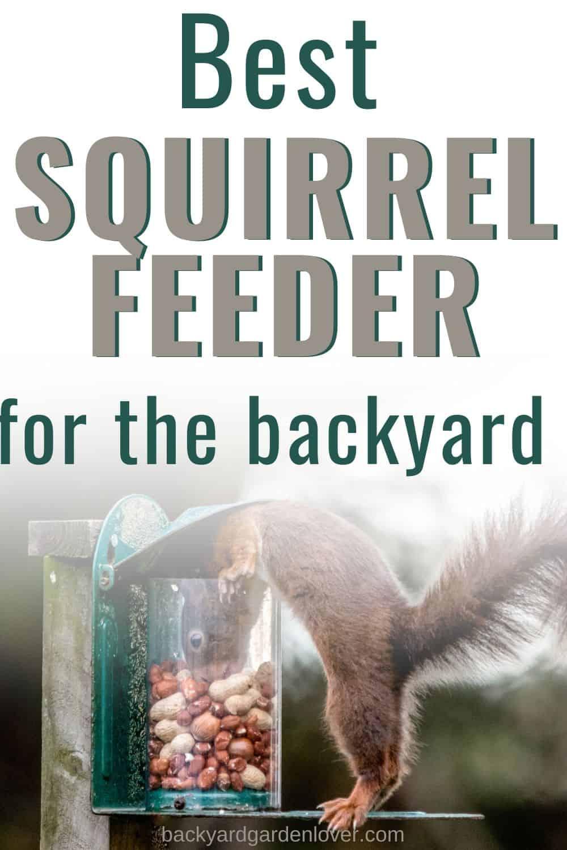 Best squirrel feeder for the backayrd