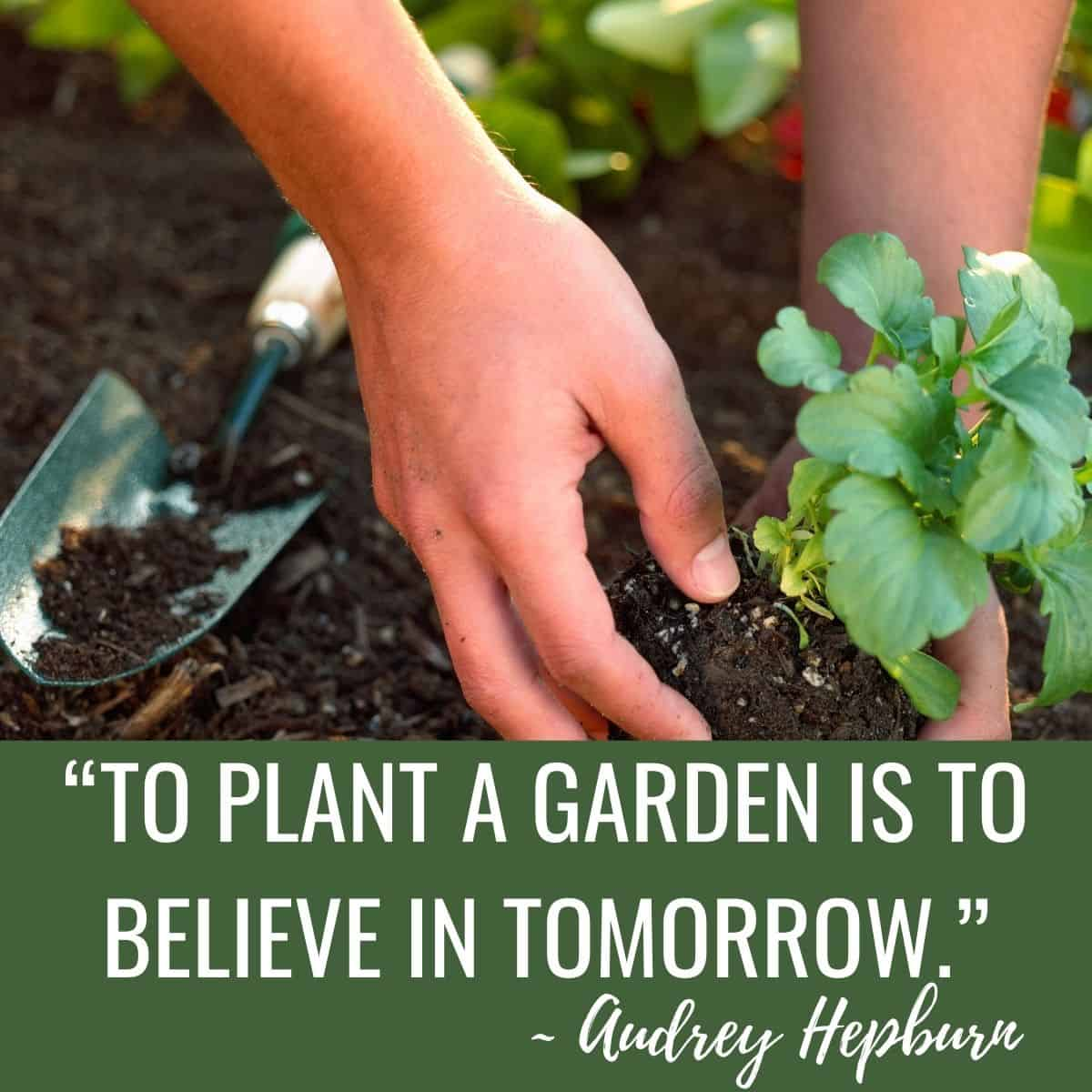 Garden quote: To plant a garden is to believe in tomorrow by Audrey Hepburn