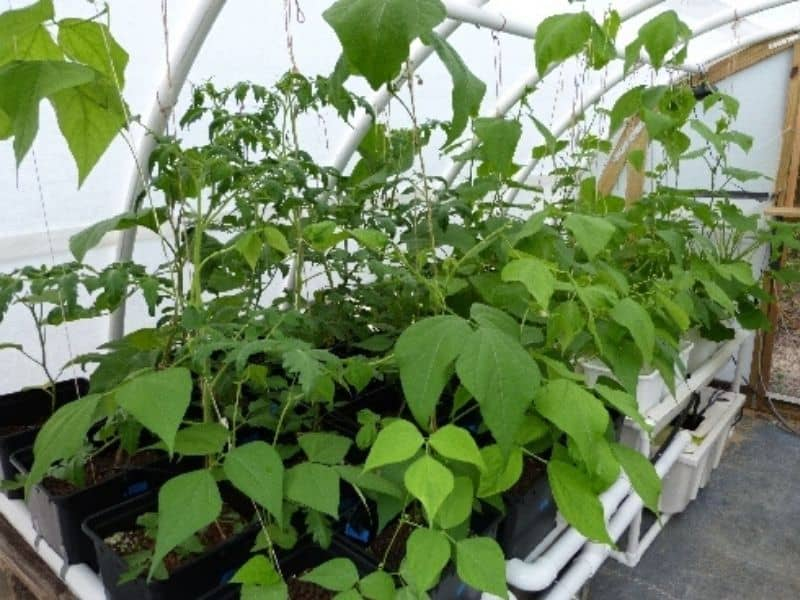 Hydroponic system in the greenhouse