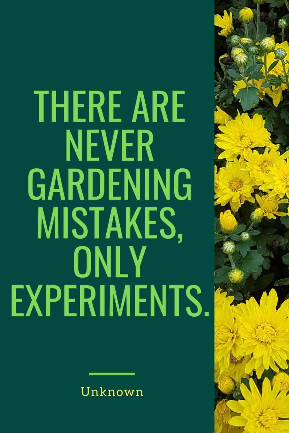 There are never gardening mistakes, only experiments.