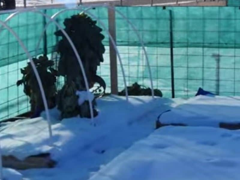 Garden covered by snow