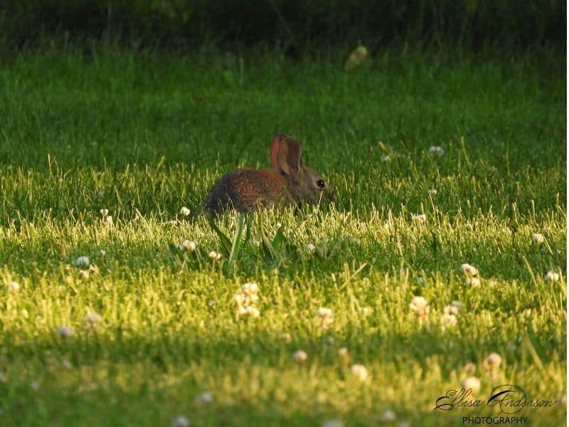Cute bunny in a grassy field