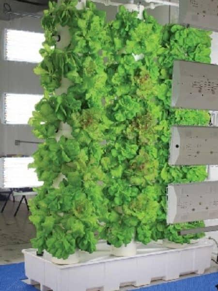 FarmTeck aeroponics vertical garden