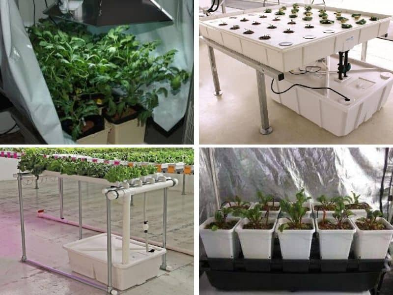 Collage of hydroponic setups