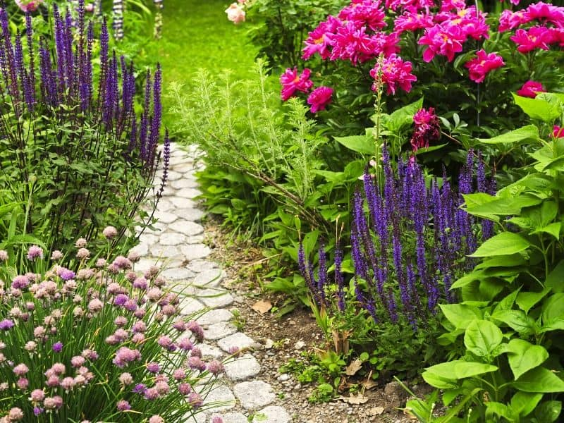 Colorful perennial flower garden