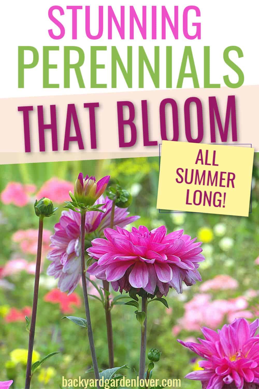 Stunning perennials that bloom all summer