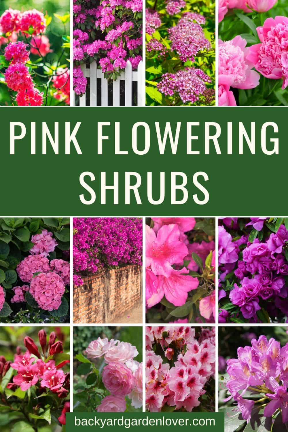 A collection of pink flowering shrubs